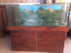 Big fish tank Forest Glen Maroochydore Area Preview