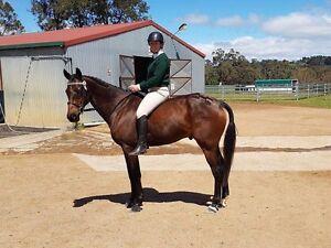 Pony Club mount Armidale Armidale City Preview