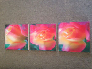 Rose canvas Berrilee Hornsby Area Preview