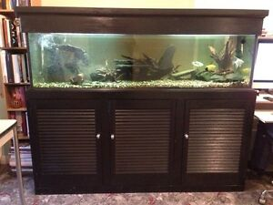 "Custom made 5'9"" fish tank aquarium with stand/hood Port Fairy Moyne Area Preview"