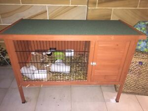 Guinea pigs (2 boys) plus hutch/carrier/ bed for sale Kirribilli North Sydney Area Preview