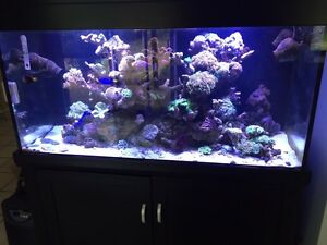 450L Marine aquarium for sale Chittering Chittering Area Preview