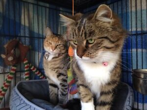 Beautiful cats searching for new home Kurri Kurri Cessnock Area Preview