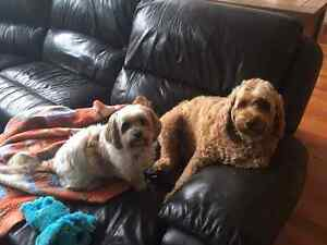 WANTED ASAP- A NEW DOG TO LOVE Kew Boroondara Area Preview
