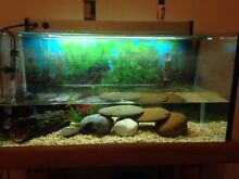 2.5ft fish tank and stand  + accessories Carrum Downs Frankston Area Preview