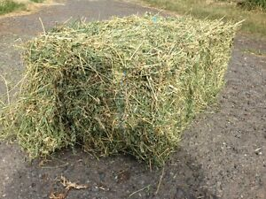 Lucerne hay $9 Yamanto Ipswich City Preview