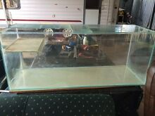 Turtle with 4ft tank Gawler East Gawler Area Preview