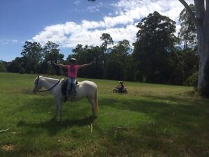 13HH pony mare Stroud Great Lakes Area Preview