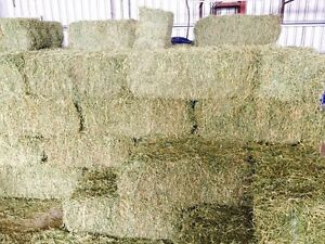 Lucerne Hay Lara Outer Geelong Preview