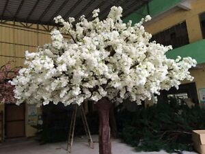 White blossom tree Glenfield Campbelltown Area Preview