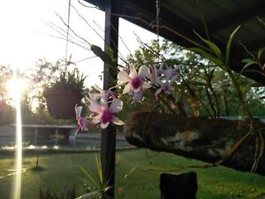 Room for rent in quiet 3brm house on 5 acres Bali resort style pool Girraween Litchfield Area Preview