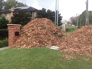 Free wood chips- free mulch- Beecroft Hornsby Area Preview