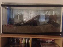 2ft Tank Hermit Crab Set Up Palmwoods Maroochydore Area Preview