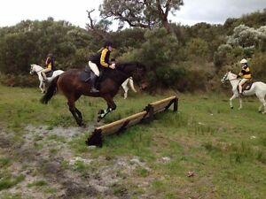 STOCKHORSE x QUARTER HORSE FOR SALE Narrikup Plantagenet Area Preview