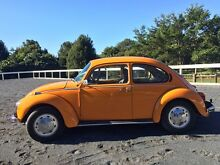 1974 Super Bug Ewingsdale Byron Area Preview