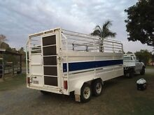 Weaners cows calves  Bulls heifers steers transport Pimpama Gold Coast North Preview