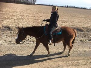 18 year old trail mare