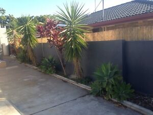 FREE assorted plants, must take all and remove Benowa Gold Coast City Preview