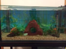 Fish tanks + accessories Glenorchy Glenorchy Area Preview