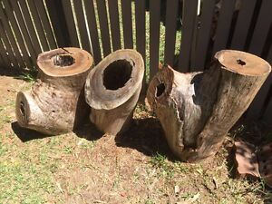 Hollow logs Beecroft Hornsby Area Preview