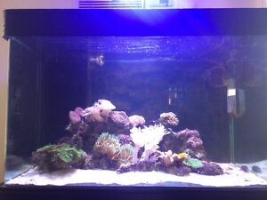 450 litre 3 foot marine tank with livestock Noble Park Greater Dandenong Preview