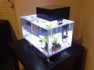 Fluval Edge 23l (Aquarium, Fish tank) Cannington Canning Area Preview
