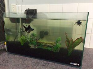 Fish Tank $75 Lambton Newcastle Area Preview
