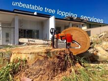 Tree lopping services free quote 0 Belmore Canterbury Area Preview