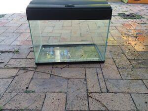 Fish Tank Corlette Port Stephens Area Preview