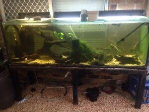 6 ft fish tank Yandina Maroochydore Area Preview