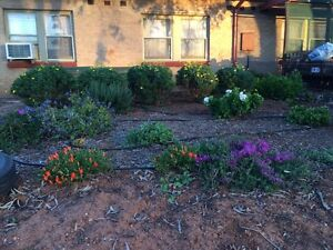 Garage and 3 day plant sale  ,interior doors,bags of potting soil Elizabeth Playford Area Preview