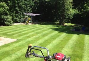 Looking to cut your grass (weekly)