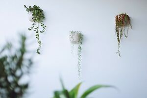 Wall planters with assortment of plants Merrimac Gold Coast City Preview