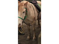 Horse riding clothes and equipment wanted