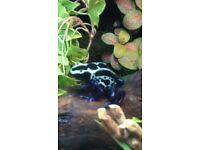 8 dart frogs plus 3ft exo terra viv