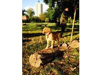 Experienced dog walker / pet sitter in Imperial Wharf and Fulham