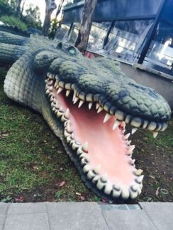 Themed crocodile!  Horsley Park Fairfield Area Preview