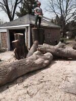 Arborist, tree removal, tree pruning, storm damage