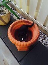 Kittens Rockbank Melton Area Preview