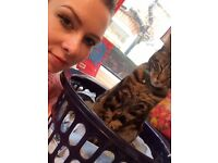 Half Bengal cat, needs a good home very friendly and affectionate