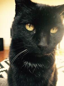 Lost Black Cat - Middle Park Middle Park Port Phillip Preview