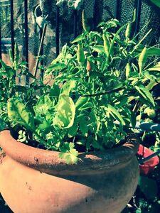 Instant Garden Eden Hill Bassendean Area Preview