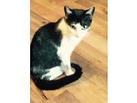 FREE Gorjus Black & White Cat To A Good Home
