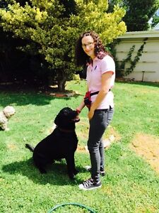 Pettastic Dog Walking & Pet Minding Services Noble Park Greater Dandenong Preview