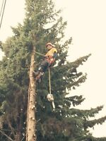 TREE PRUNING / REMOVALS