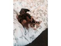 Gorgeous Female Cat