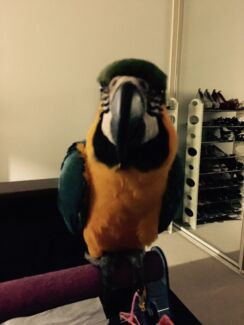 Lost Parrot North Yunderup Murray Area Preview