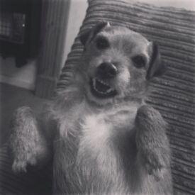 Mojo the dog