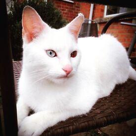 URGENT CAT FOSTER CARERS NEEDED !!
