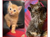 Ginger Boy & Fluffy Girl are Looking for their Forever Home